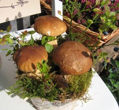 svamparr.jpg